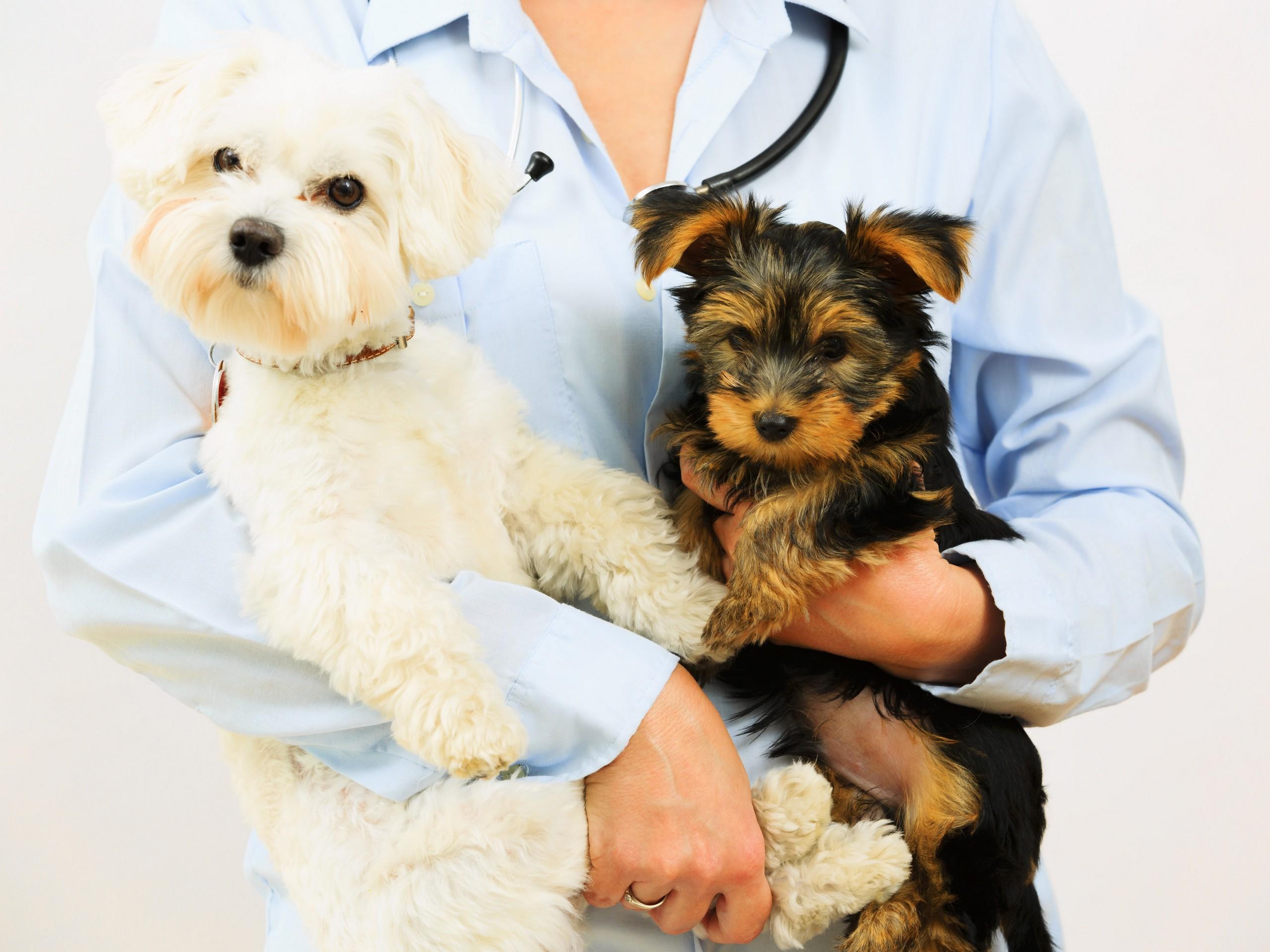 boarding veterinarian and animal hospital in burlington ky animal hospital in burlington ky